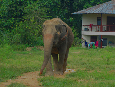 Responsible Alternatives to Elephant Rides