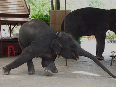 The World's Cruellest Animal Attractions