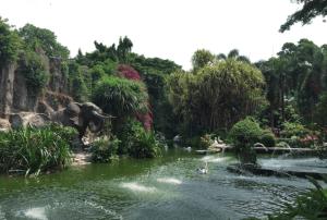 入場口目の前の湖(ペリカンだらけ)