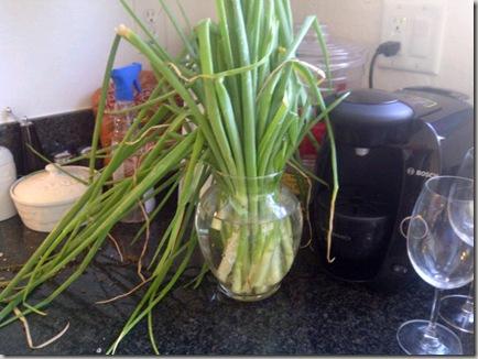 Onion stalks