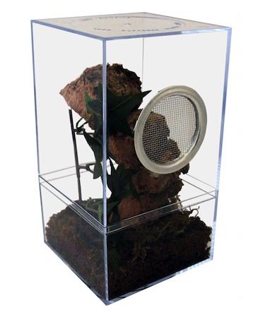 secure tarantula cage