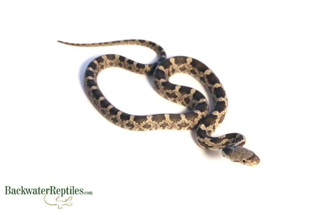 what to do if your reptile escapes
