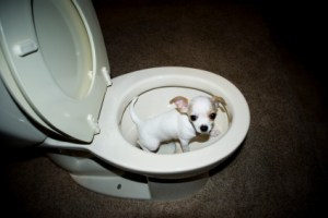 dog-potty-training