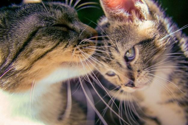 kitten-488667_1280