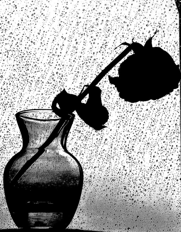 Rose in the Rain. Courtesy Pixabay.