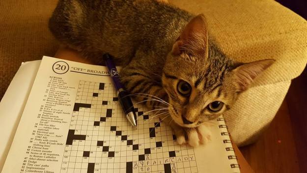 kitty puzzle