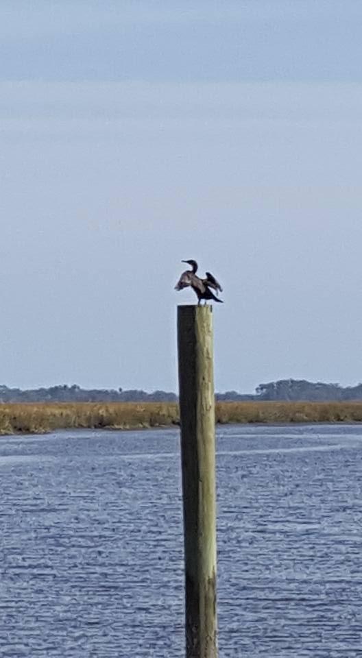 My neighbor on the dock.