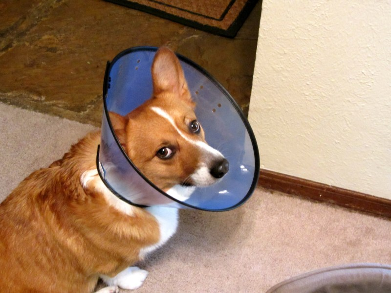 Large Of Cone Of Shame