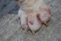 Small Of How Many Toes Does A Dog Have