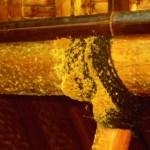 Pengawetan pada Bambu Anti Teter Menggunakan BioCide Insecticide : Pengawetan Pada Bambu