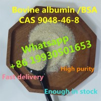 Chinese factory sell Bovine albumin with CAS 9048-46-8 BSA (whatsapp +8619930501653)