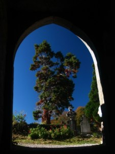 image of a tree framed by an old doorway in Muckross abbey