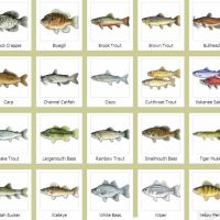fishes with name - Fishes Names and Pictures