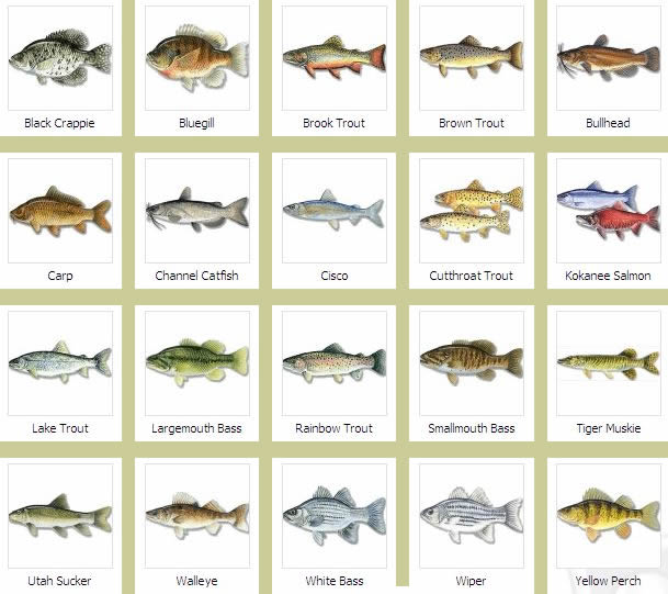 Fish Species   bajafishing.net