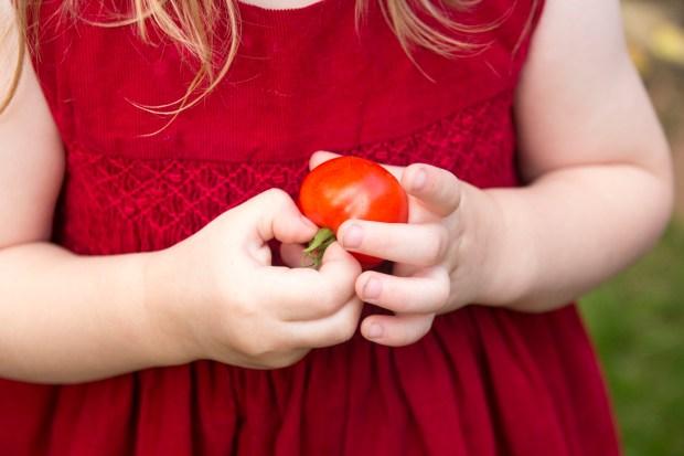 tomato picker