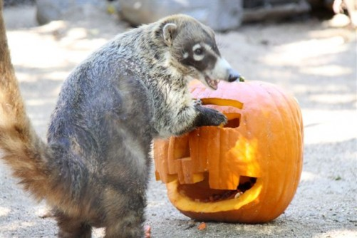 Get Festive With The Animals at Halloween Zoo-tacular | @OCParks #OCZoo #Halloween