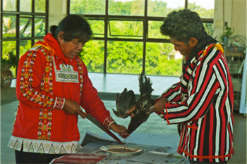 While Datu 'Vic' Saway says prayers for guidance and peace, a chicken is sacrificed in the ritual reaffirming kinship between the Bangsamoro and Indigenous Peoples.