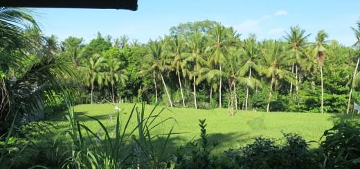 Se loger près d'Ubud - Chez Nyoman à Batuan - Balisolo (16)