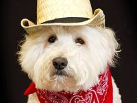 10 Quick and Easy Halloween Pet Costumes