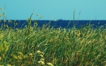 Naturlandschaft Estlands