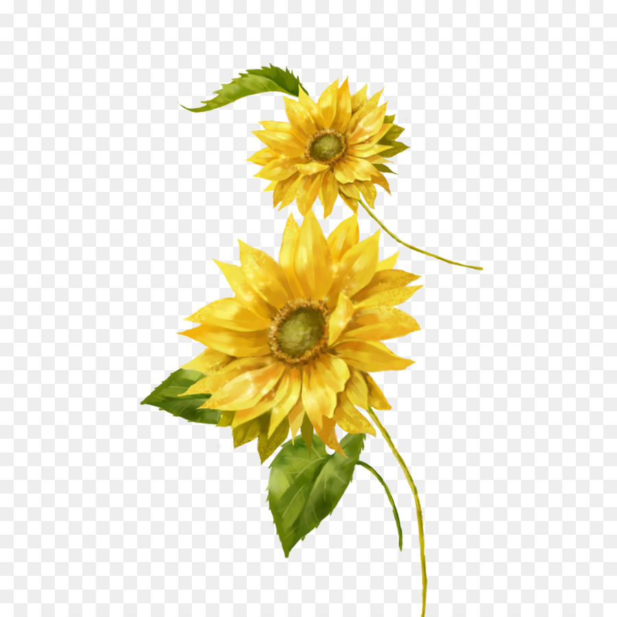 Captivating Common Sunflower Painting Yellow Euclidean Vector Sunflower Photos Isabout Sunflower Common Sunflower Painting Yellow Euclidean Vector Sunflower Photos houzz-03 Gerbera Daisy Seeds