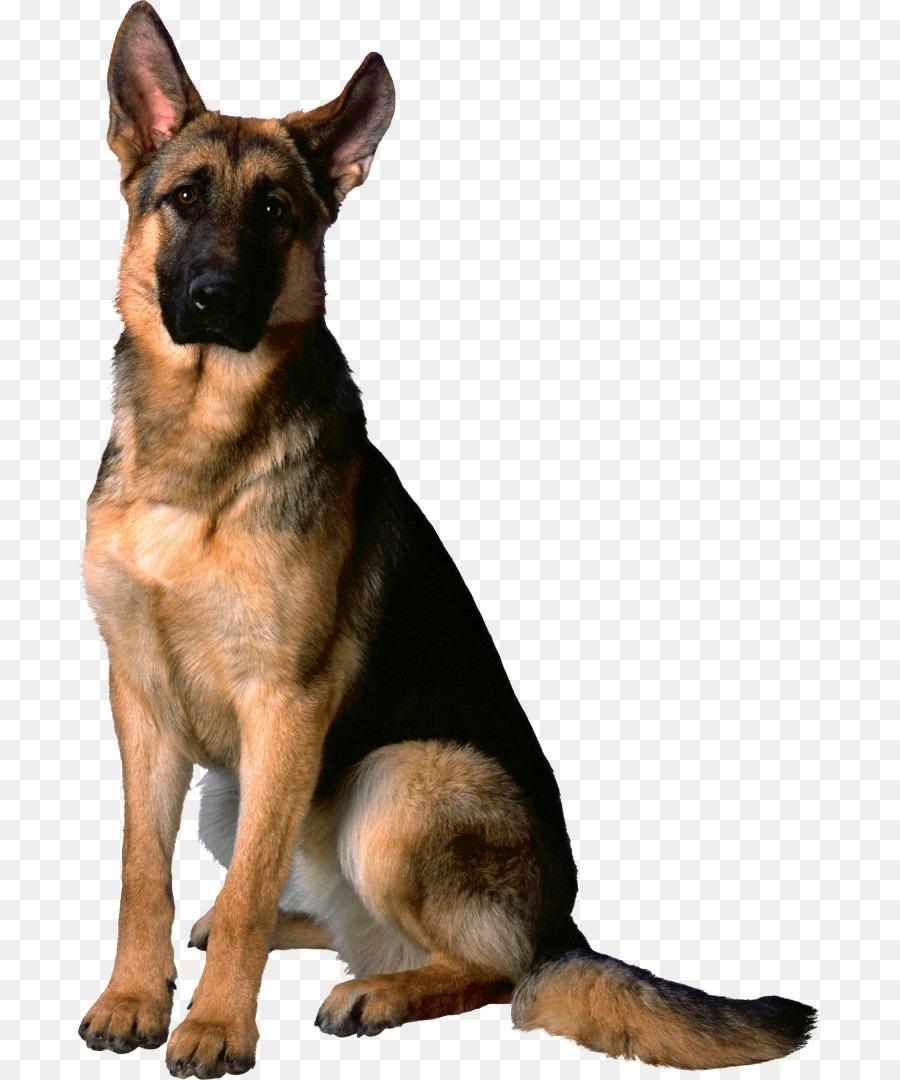 Fullsize Of German Shepherd Mixed With Husky