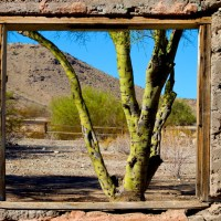 Palo Verde Through The Window