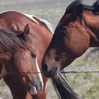 Horse Talk