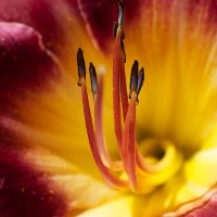 Come Stamen With Me