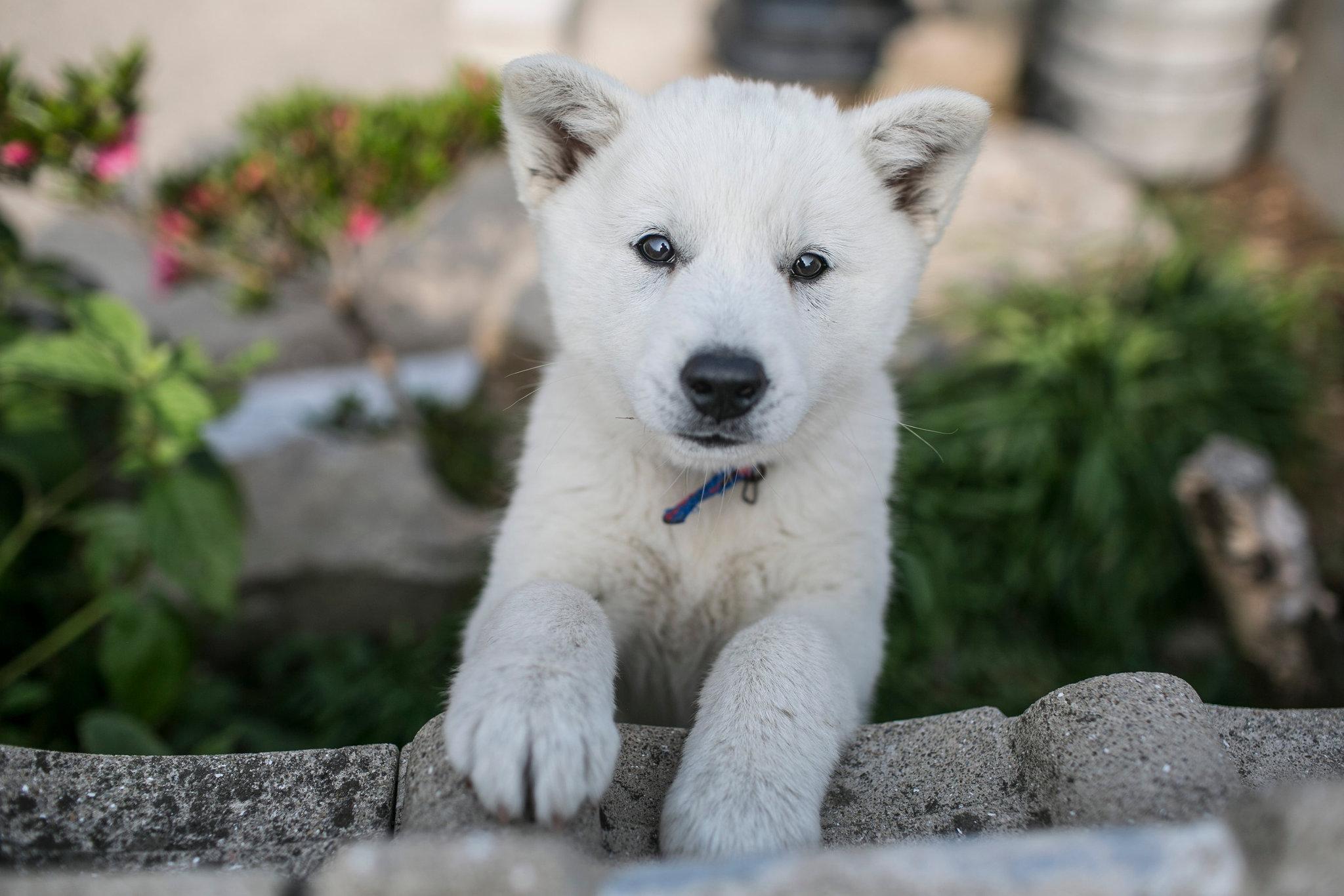 Fullsize Of Most Loyal Dog Breeds