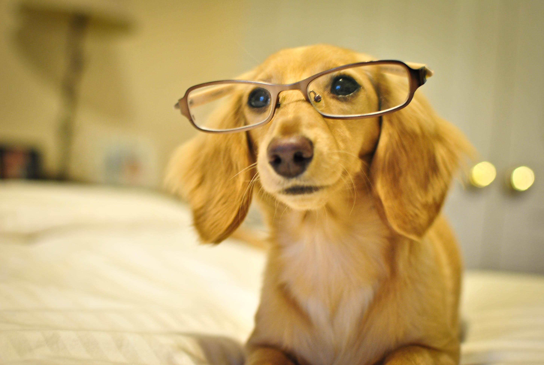 Superb Mia Glasses Dog Names Barkpost German Female Boxer Dog Names German Female Dog Names Weimaraner bark post German Female Dog Names