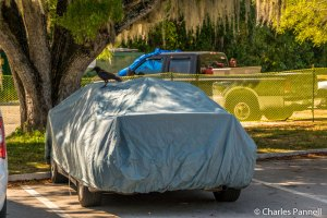 Although we didn't see a single vulture, one crow did take a liking to our car cover!