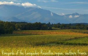 Wine Regions and World Vineyards