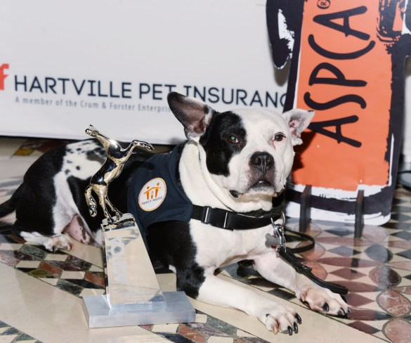 ASPCA announces 2014 Dog of the Year