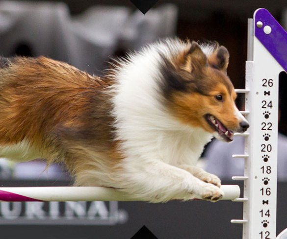 Check it out – Purina Pro Plan Incredible Dog Challenge Sweepstakes
