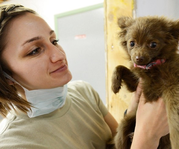 Caring for a Special Needs Dog