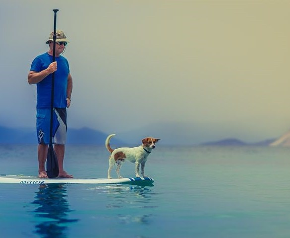 Doggy Lifestyle: Stand up Paddle Boarding with Dogs