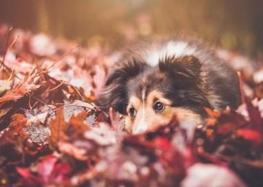 6 Must-Haves for the Fall Adventure Dog