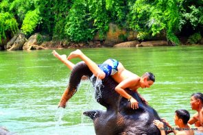 Elephant Trekking and Swimming in Thailand
