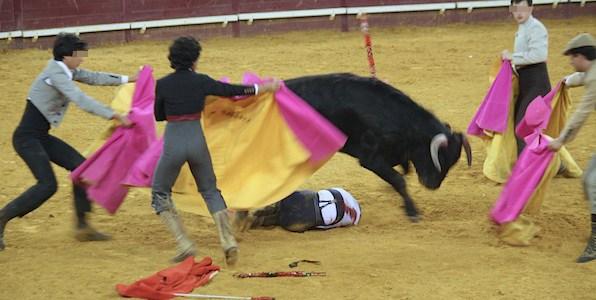 Proposta prevê prática de toureio para maiores de 16 anos
