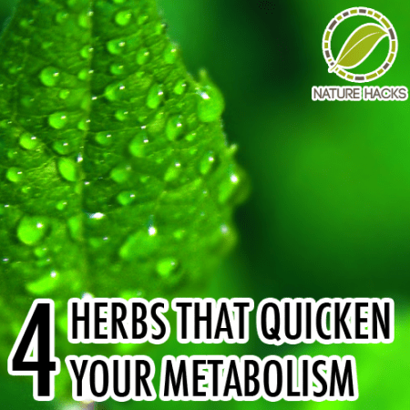 4-herbs-that-quicken-your-metabolism