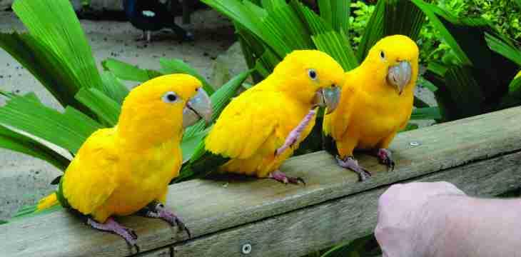 Zooparque Itatiba – vamos conhecer os animais