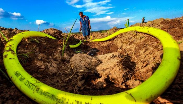 Espace vert et dynamique en république du Congo