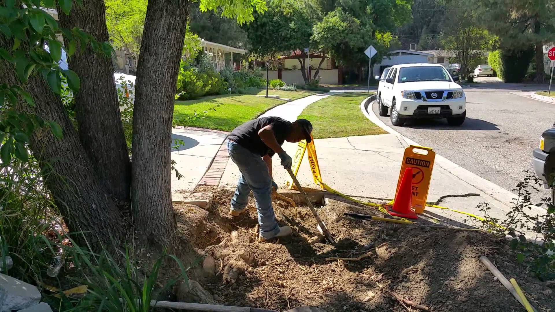 Alluring Sewer Pipe Rock Salt How To Kill Tree Roots Cutting Tree Roots El Sobrante Tree Service Arborist How To Kill Tree Roots houzz-02 How To Kill Tree Roots
