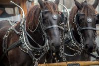 horse trolley