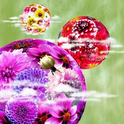 flowers-175036