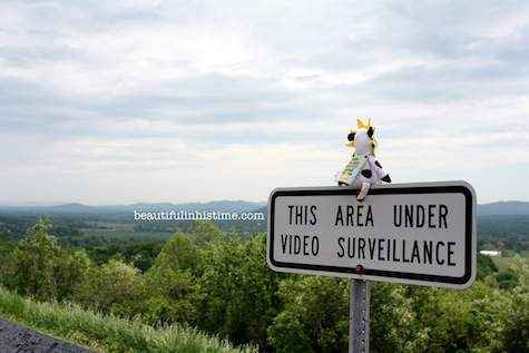 18 chickfila cow scenic overlook