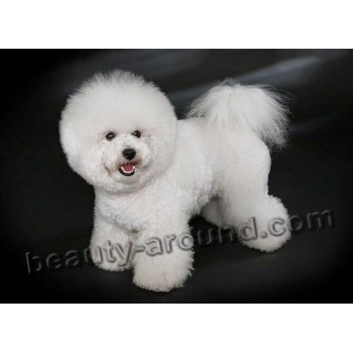 Medium Crop Of Large White Dog Breeds