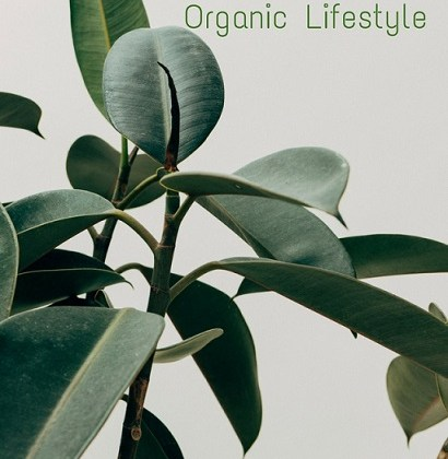 Health Benefits of Organic Lifestyle