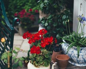 flower-teapot
